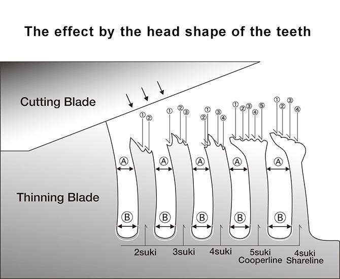 The effect by the head shape of the teeth